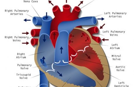 ניתוח לב פתוח