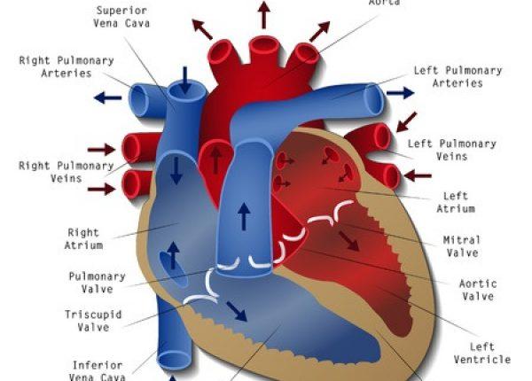 ניתוח לב פתוח מסתם אבי העורקים הגורמת להיצרותו.